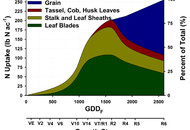 Corn Nitrogen Uptake-Credit IPNI