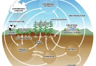 The Nitrogen Cycle-Credit: Fertilizer101.org